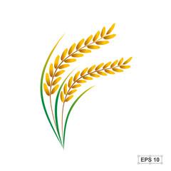 240x240 Rice,vector Illustration