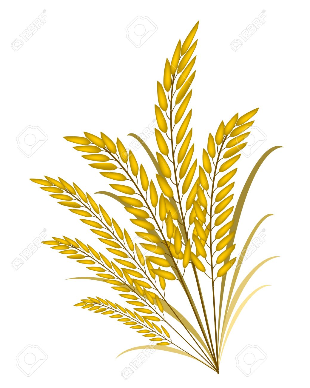 1039x1300 Rice Crop Clipart Amp Rice Crop Clip Art Images