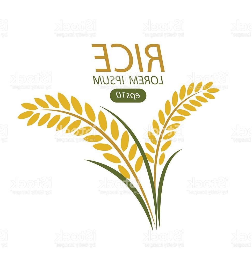 973x1024 Best Hd Rice Vector Ai Photos