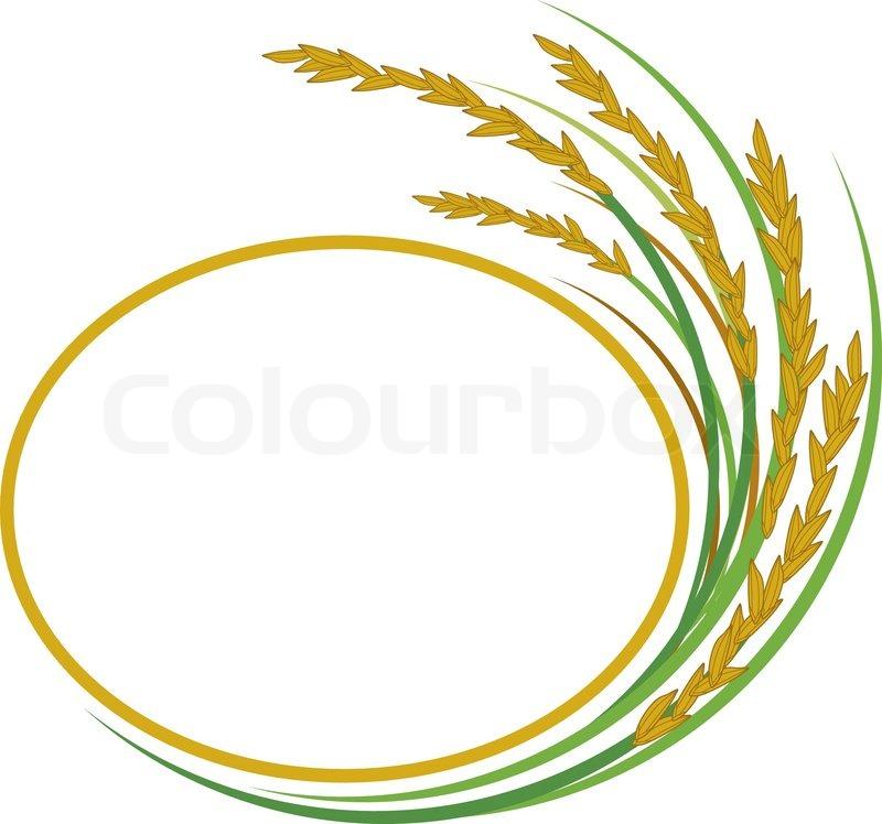 800x748 Rice Design On White Background Stock Vector Colourbox