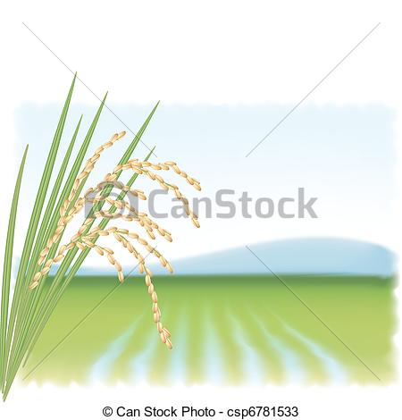450x470 Rice Field And A Branch Of Ripe Rice. Vector Illustration.