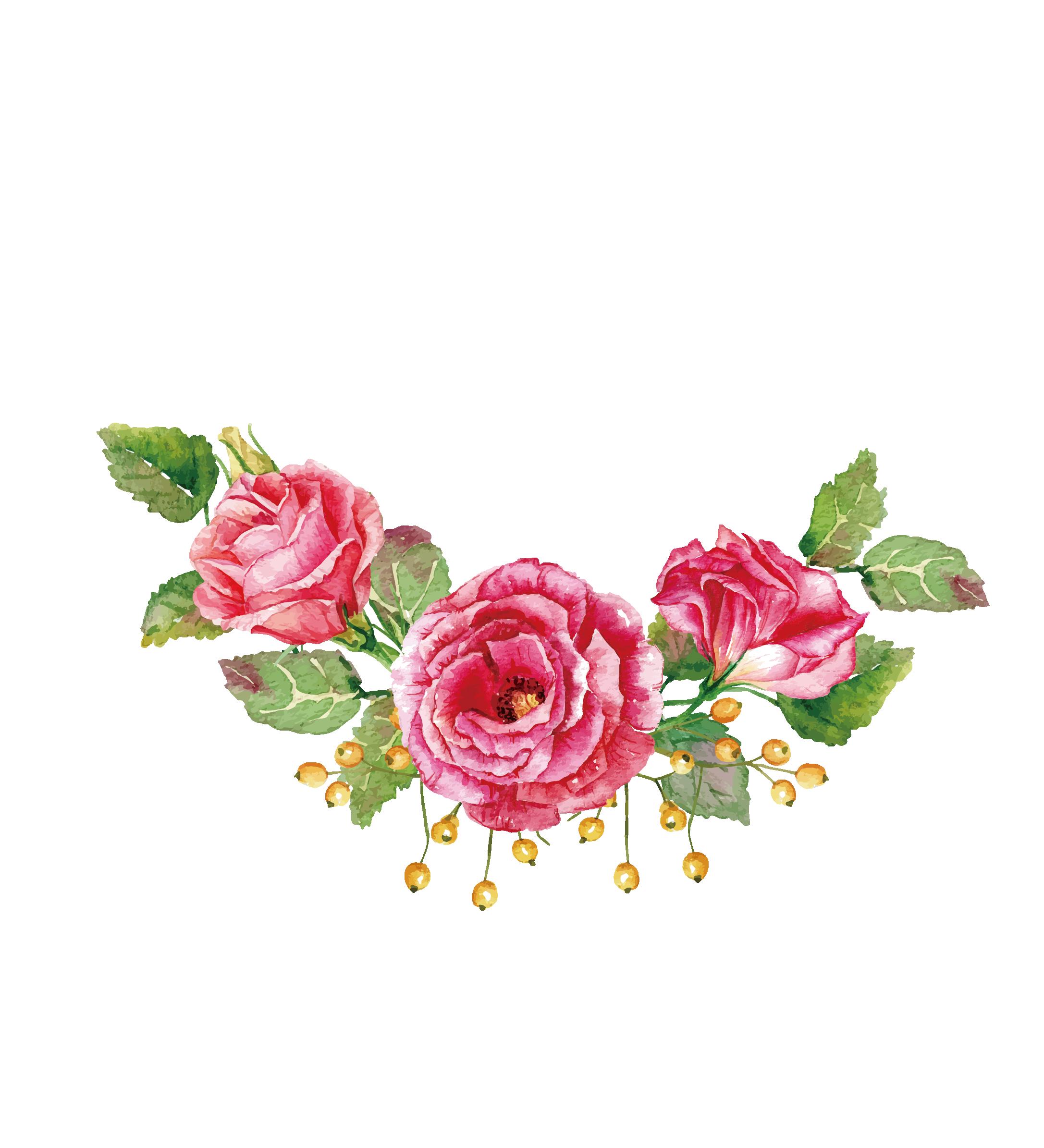 Rosa Vector