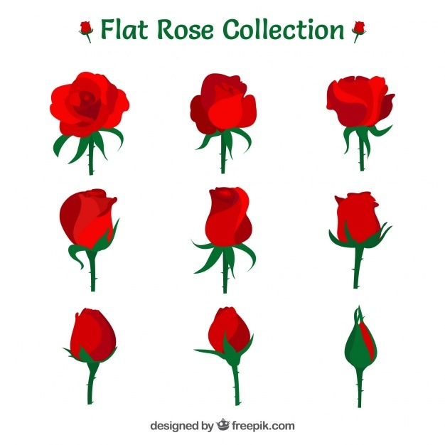 626x626 Rose Bud Vectors, Photos And Psd Files Free Download