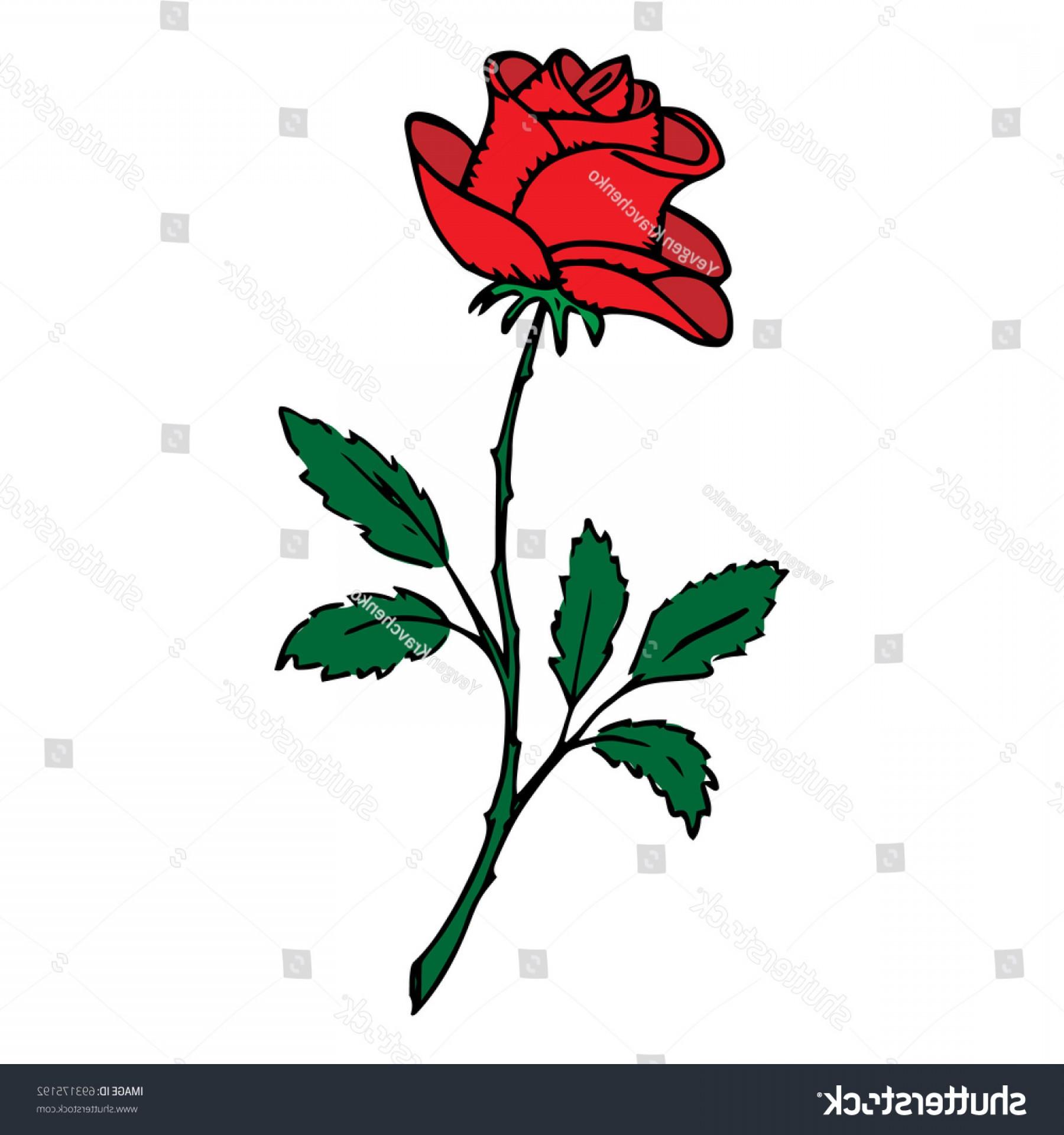 1800x1920 Rose Hand Drawing Blossoming Rosebud Vector Shopatcloth
