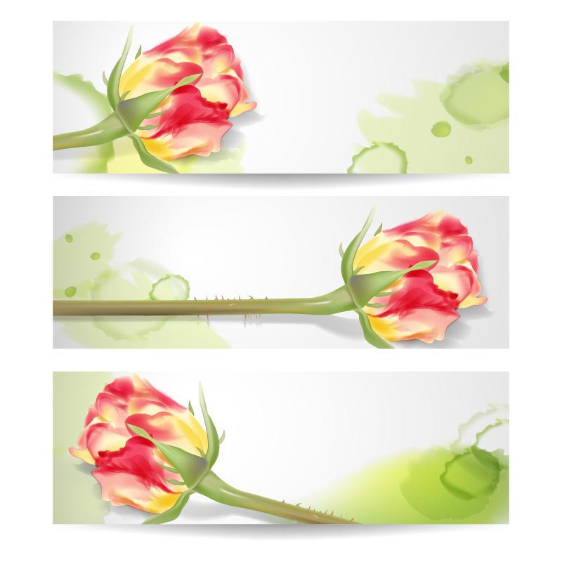 800x800 Beautiful Rose Bud Banner Vector [Ai]