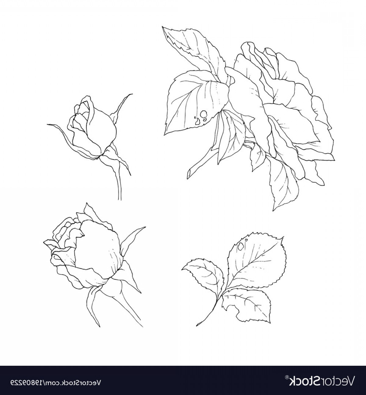1200x1296 Set Of Detailed Isolated Outline Rose Bud Vector Shopatcloth