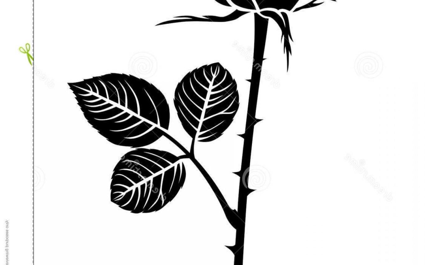 1368x855 Stock Illustration Silhouette Beautiful Rose Bud Vector Hot