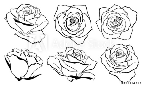 500x300 Vector Set Of Detailed, Isolated Outline Rose Bud Sketches In