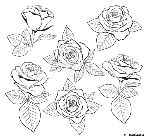 500x473 Vector Set Of Detailed, Isolated Outline Rose Bud Sketches With