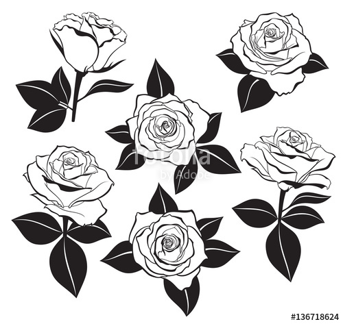 500x473 Vector Set Of Detailed, Isolated Outline Rose Buds Sketches With