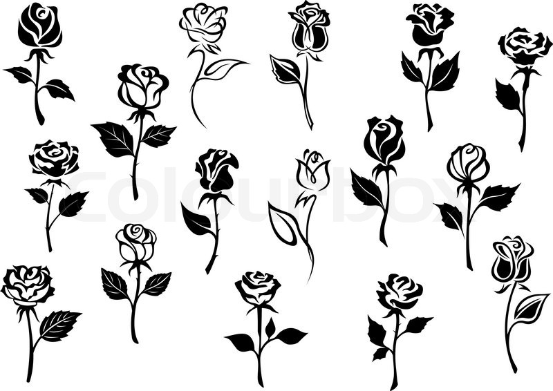 800x566 Black And White Elegance Roses Flowers Set For Any Floral Design