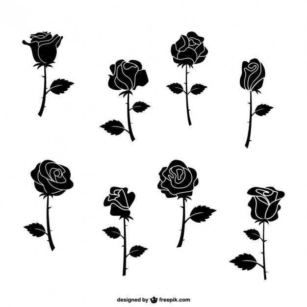 626x626 Rose Vectors, Photos And Psd Files Free Download