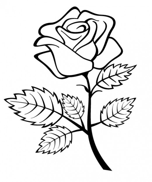 521x626 Rose Flower With Branch And Leaves Vector Free Download