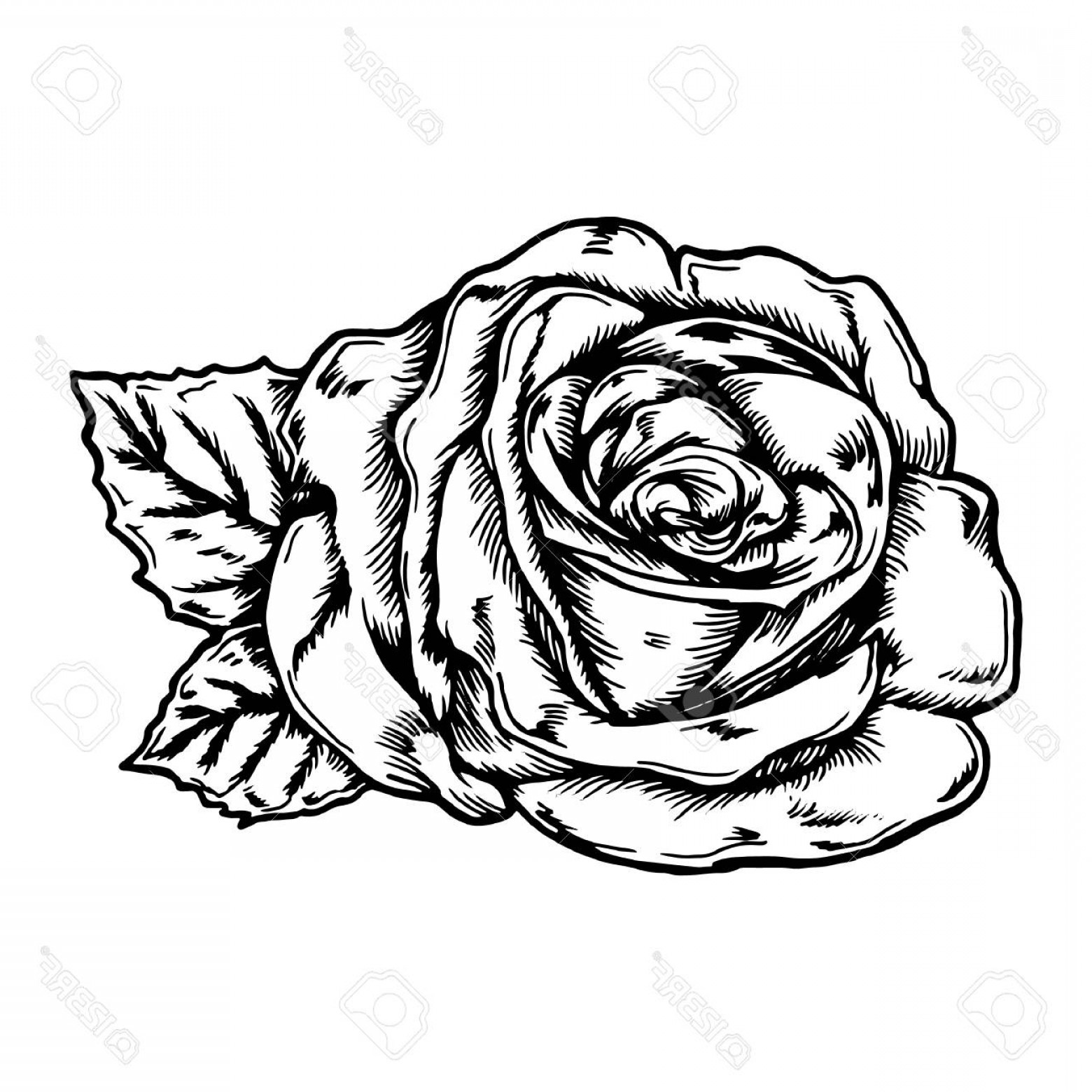 Rose Icon Vector At Free For Personal Use Flower Line Diagram Simple Drawing Of Bud Stock 1560x1560 Photostock Thin Lazttweet