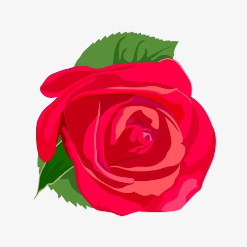 500x500 Red Rose Vector, Rose Vector, Flowers, Green Png And Vector For