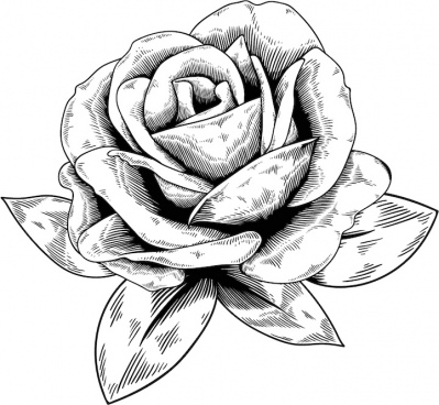 399x368 Free Rose Vector Png Images, Backgrounds And Vectors For Free