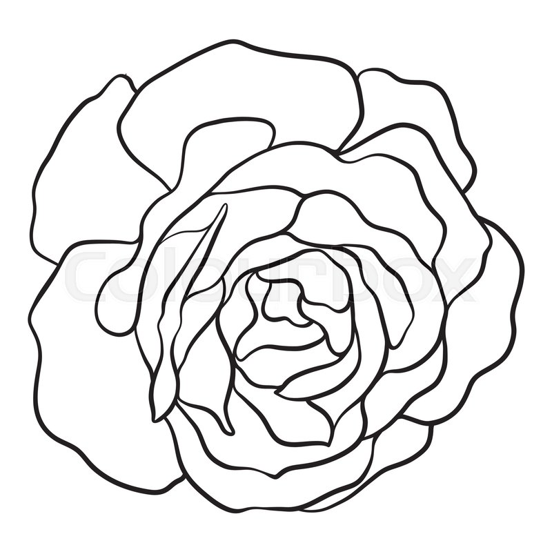 800x800 Isolated Rose. Outline Drawing. Stock Line Vector Illustration
