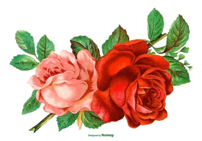 700x490 Rose Free Vector Art
