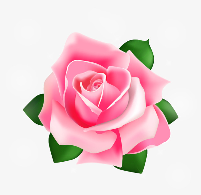 650x632 Rose Vector, Rose, Vector, Red Png And Vector For Free Download