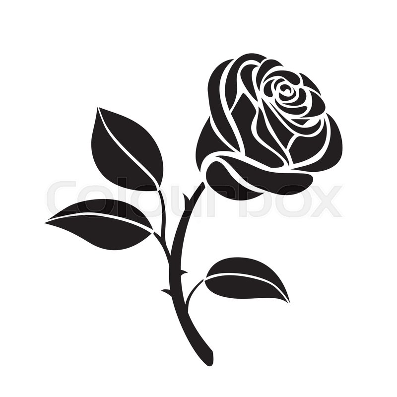 800x800 Abstract Flower Rose Vector Outline Icon. Creative Luxury Fashion