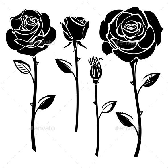 590x590 Roses (Vector Eps, Ai Illustrator, Cs, Beauty, Black And White