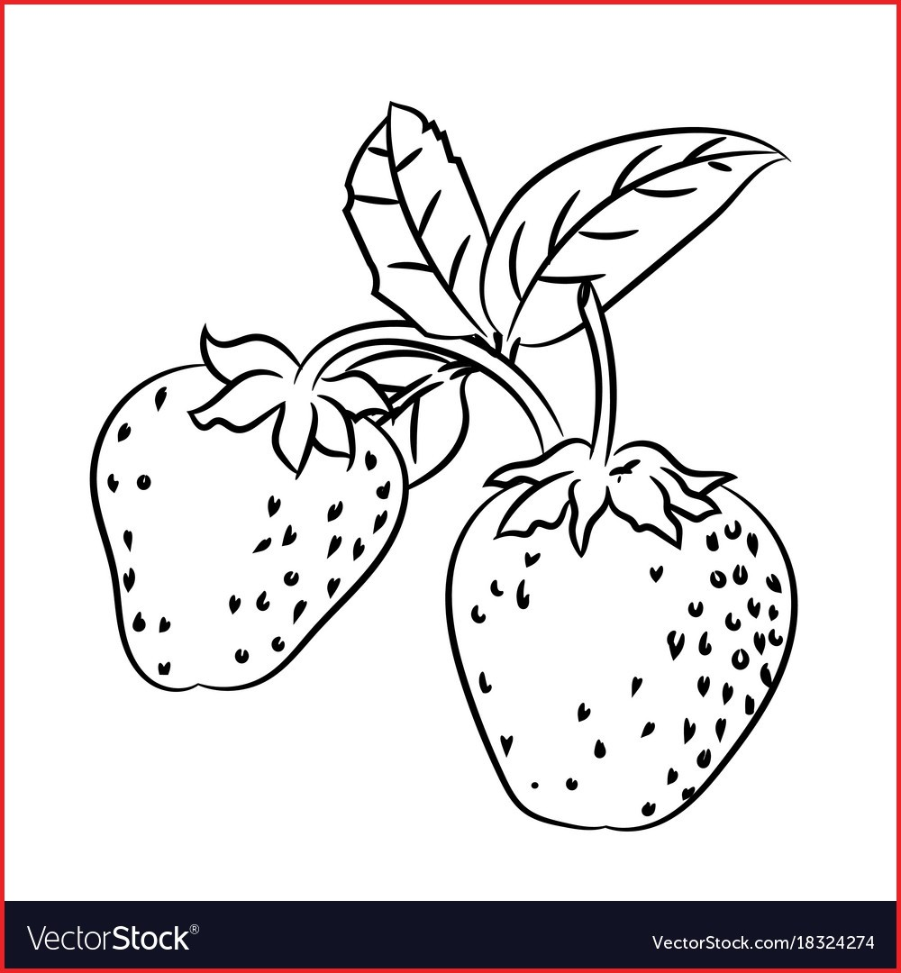 1000x1080 Simple Line Drawings 133791 Line Drawing Of Strawberry Simple Line