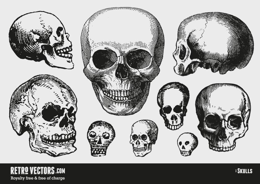 841x596 Free Vector Skulls Vintage Vectors Royalty Free Free Of