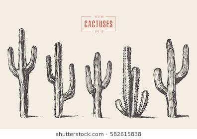 396x280 Drawn Cactus Saguaro Cactus