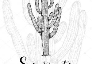 300x210 Saguaro Cactus Drawing Hand Drawn Saguaro Cactus Royalty Free