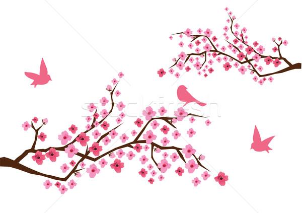600x423 Cherry Blossom Vector Illustration Lilac ( 3128903) Stockfresh