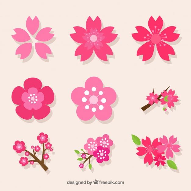 626x626 Decorative Pack Of Variety Of Cherry Blossoms Vector Free Download