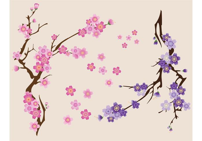 700x490 Free Cherry Blossoms Vector