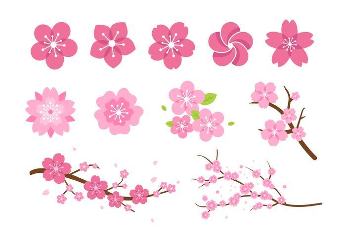 700x490 Pink Flower Blossom Vectors