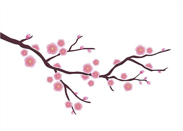 612x439 Royalty Free Plum Blossom Clip Art Vector Amp Illustrations Cherry