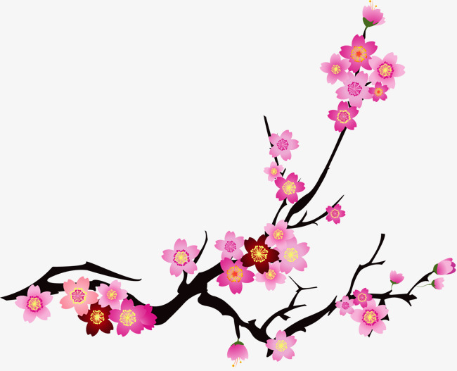 650x527 Vector Painted Pink Cherry Blossoms, Cherry Vector, Vector, Hand