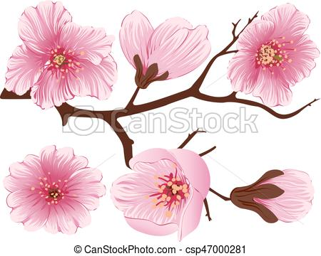 450x360 Vector Sakura Flower Branch Element. Elegant Element For Your