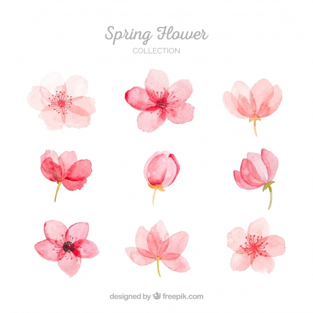 626x626 Blossoms Vectors, Photos And Psd Files Free Download