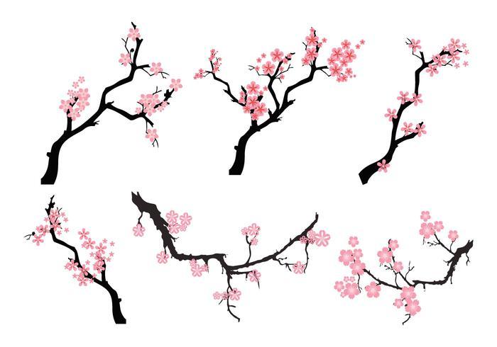 700x490 Cherry Blossom Free Vector Art