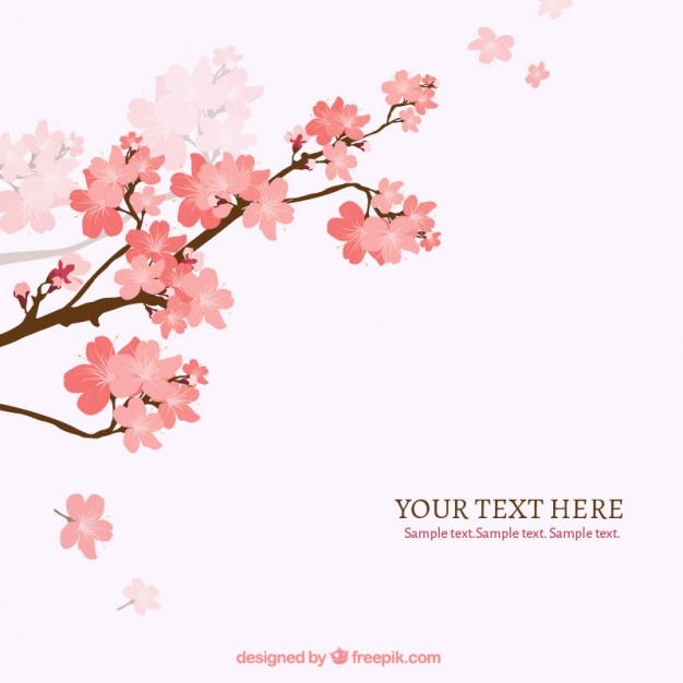 626x626 Cherry Blossom Tree Vectors, Photos And Psd Files Free Download