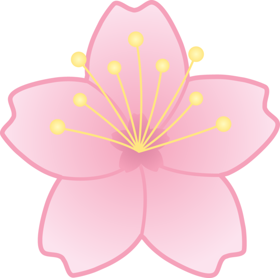 550x547 Drawn Sakura Blossom Graphic