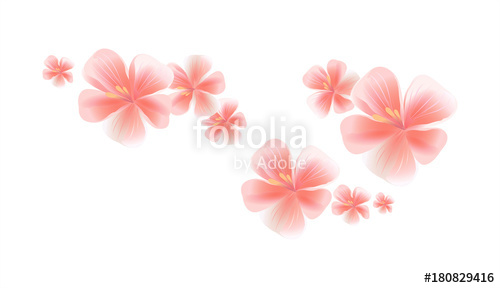 500x288 Pink Flying Flowers Isolated On White Background. Sakura Flowers
