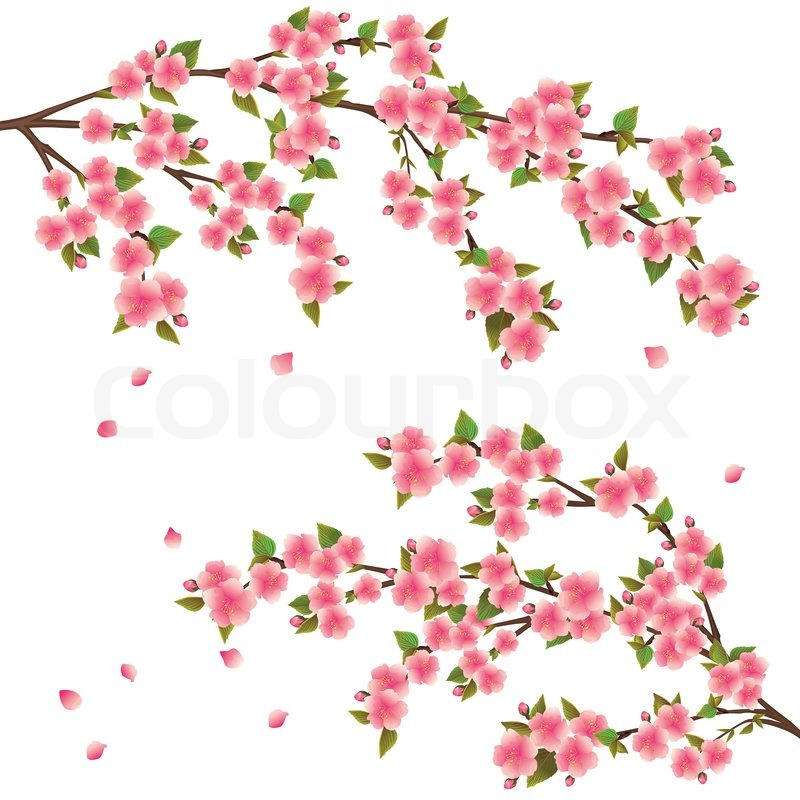 800x800 Realistic Sakura Blossom