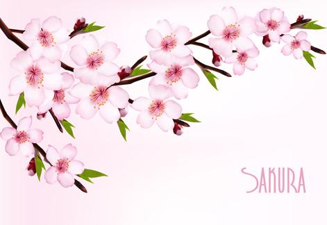 471x324 Sakura Clipart Vector 3870636