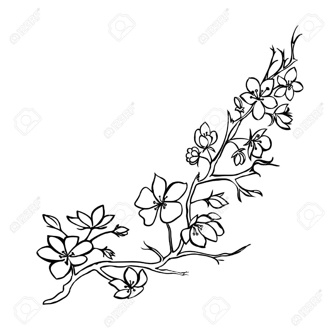 1300x1300 Sakura Flower Sketch Sketch. Twig Sakura Blossoms . Vector