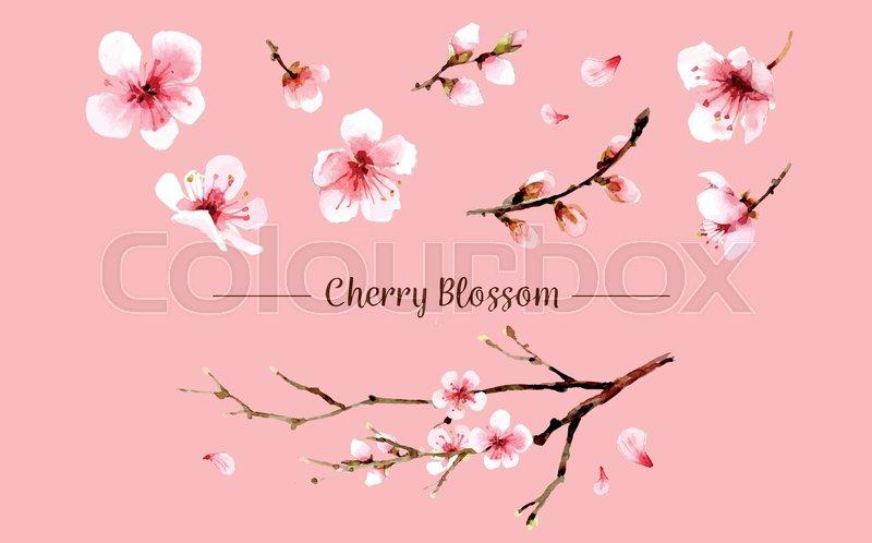 800x498 Sakura Flower Set. Sakura Vector Flower. Vector Illustration