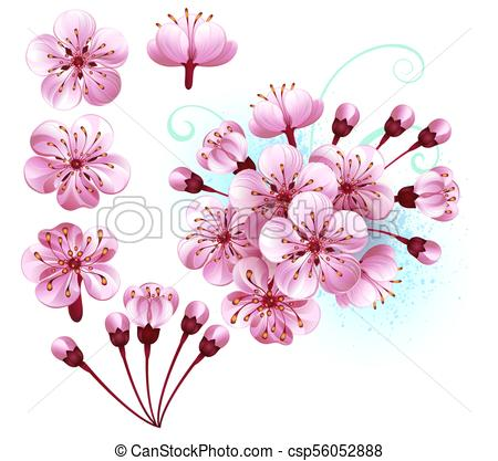 450x417 Set Of Sakura Flowers. Set Of Pink Sakura Flowers On White