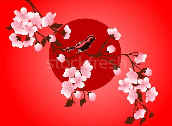 600x441 Cherry Blossom Art Picture. Vector Sakura Flower Vector