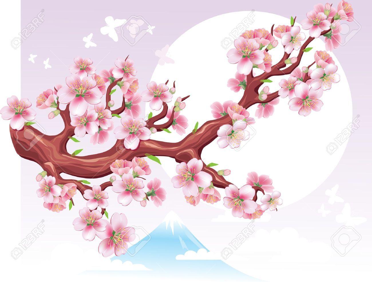 1300x984 Sakura Flower Vector