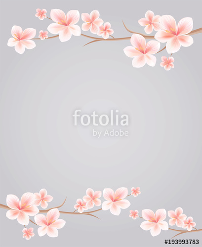 409x500 Branches Of Sakura With Pink Flowers Isolated On Grey Background