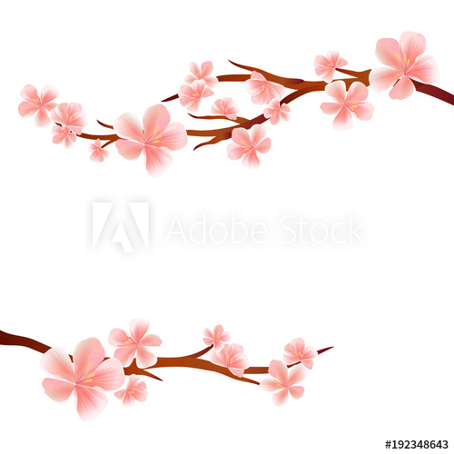 500x500 Branches Of Sakura With Pink Flowers Isolated On White Background